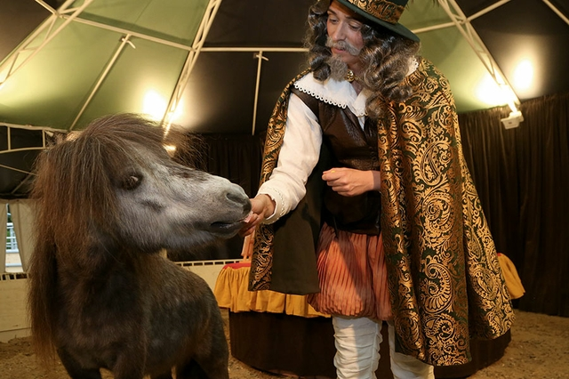 Das wundersame Pferd Marocco