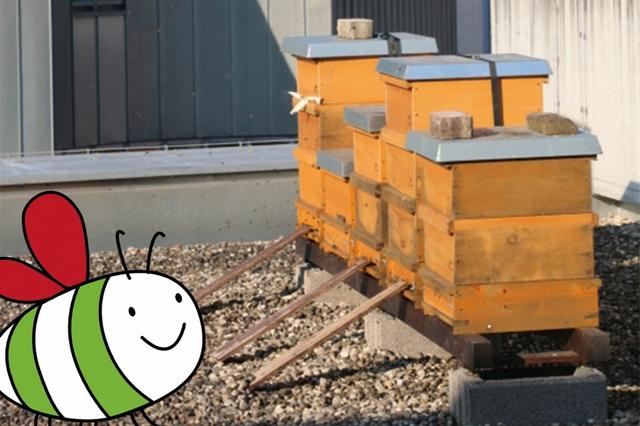 Stadtbienen