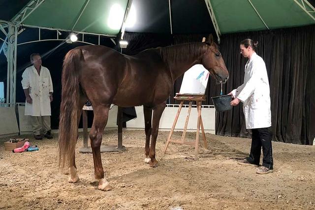 Werkschau der malenden Pferde