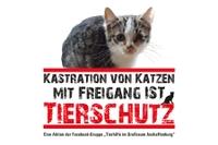 Katzen-Kastration